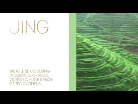 JING Tea - Spring Tea Buying Trips 2010