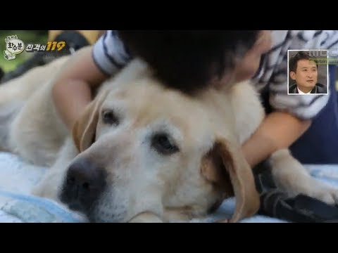 [HOT] 화수분 - 정준하-루나 진격의 119, 기적적으로 살아난 개 '럭키'의 사연 20130912