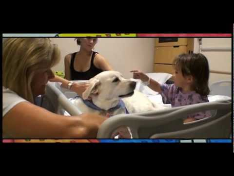 Animal-Assisted Therapy and Activities