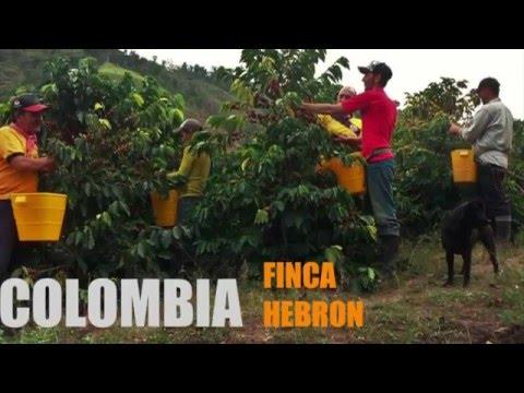 Colombia Finca Hebron - Caffè vincitore della Cup of Excellence