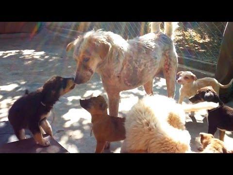 Кутренца му помагаат на кучето, коешто за малку не умрело, да го залечи неговото скршено срце