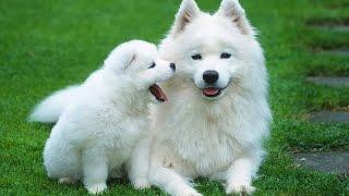 10 Giống Chó Đẹp Nhất Thế Giới