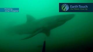 ダイバーがサメと遭遇