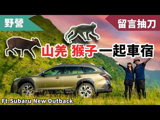 開了五年的Outback終於升級!上山下海看見各種野生動物的車宿之旅 Ft. Subaru All-New Outback