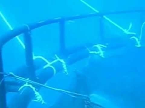 Submersible Cage OCEANIS 1