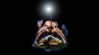 10 Scariest Deep Sea Creatures