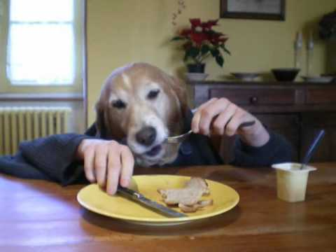 Repeat youtube video funny human dog