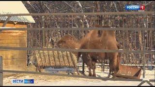 Как влияет аномальное для февраля тепло на обитателей Большереченского зоопарка?