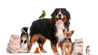 Animal Sounds for kids  - 33 Real Animal Videos with Original Voice | English Class