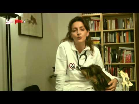 Il tumore alla mammella in cani e gatti