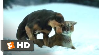 A Dog's Way Home (2018) - Fun in the Snow Scene (4/10) | Movieclips