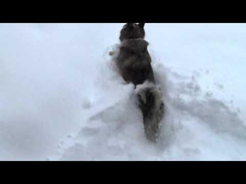 Dog vs Snow