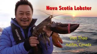 MC VIET THAO- CBL (468)- NOVA SCOTIA LOBSTER- TÔM HÙM CANADA- JUNE 22, 2016.