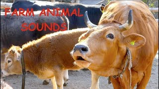 REAL FARM ANIMAL SOUNDS WITHOUT MUSIC, for children and parents - cow mooing for kids, Kuh muht