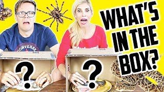 WHATS IN THE BOX CHALLENGE! (DAY 204)