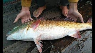 2 anh nông dân suýt nhậu con cá tiền tỷ mà không hay biết