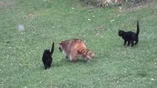 Blind Raccoon and his bodyguards