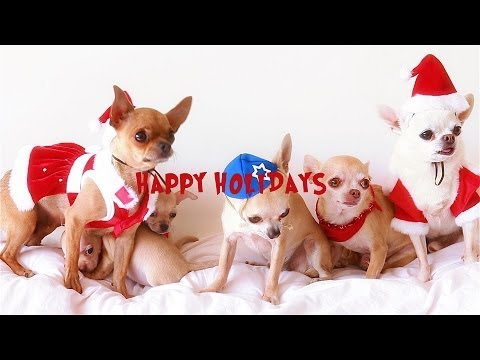 Happy Christmas to all the Chihuahuas