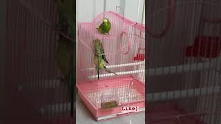 Parrots react to classical music. River flows in your