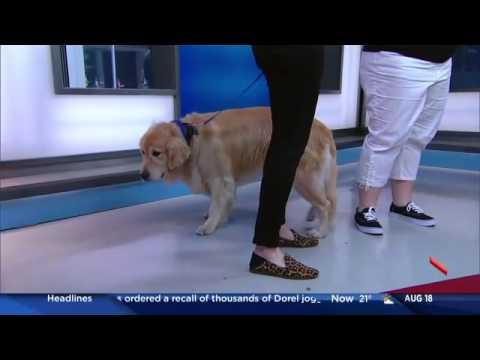 Haute Dog - Global Morning Show August 18, 2016
