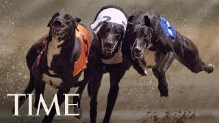 Florida's Greyhound Racing Ban Means Thousands Of Dogs Will Need A New Home | TIME