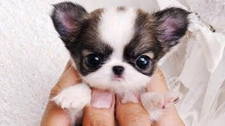 Cute is Not Enough - Funny Cats and Dogs Compilation #34