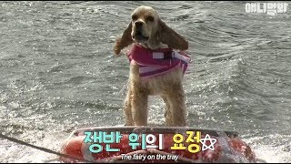 Instead of on expensive board~ the tray riding dog