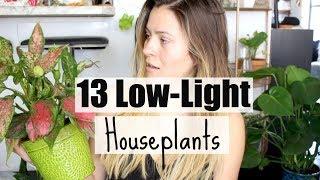 13 Low-Light Houseplants! | Plants That Love Low-Light
