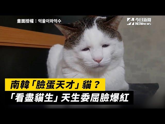 南韓臉蛋天才貓?天生委屈貓爆紅