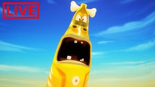 🔴 LIVE LARVA | GIANT LARVA | BEST OF LARVA | Cartoon Movie | Cartoons For Children | LARVA Official