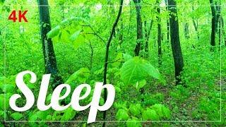 ☯️ Deep Sleep Relaxation Alpha Waves