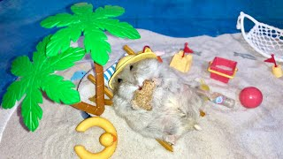 Hamster relaxing at the beach - Cute and funny videos of hamsters