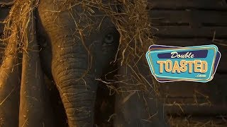 DUMBO OFFICIAL TEASER TRAILER REACTION