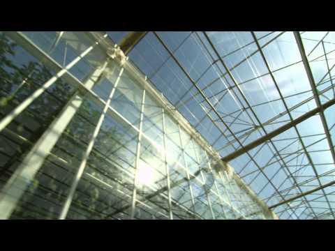 """Ontario Greenhouse Vegetable Growers """"Fresh"""" video"""