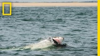 How I Got the Shot: Photographing Great White Sharks off Cape Cod | National Geographic