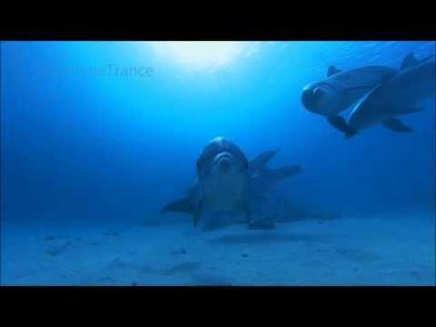 Pete Silver & Yustin Viviane-Dolphin (Original Mix)