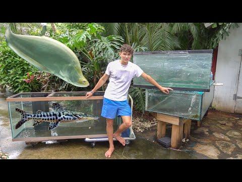 HUGE TANKS Calls For HUGE FISH!!!!