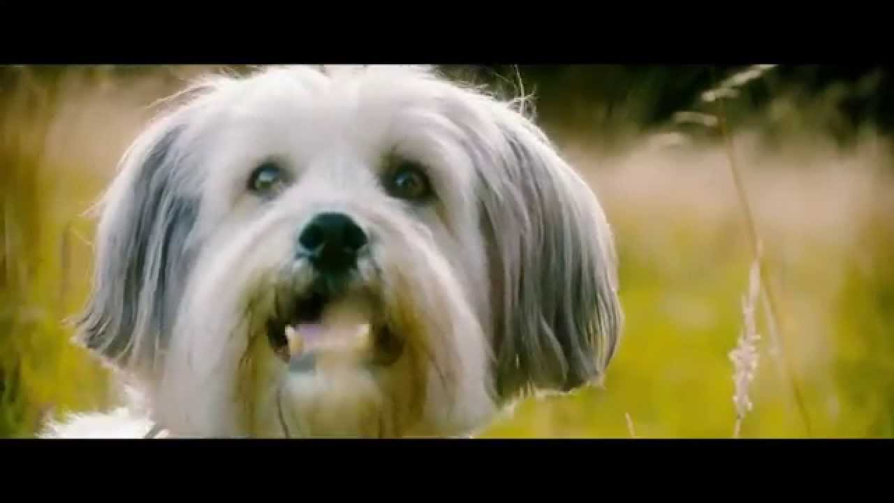 Pudsey the Dog: The Movie (2014) Трейлър