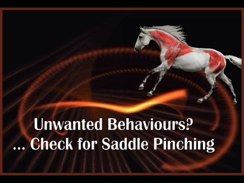 Unwanted Behaviours? Check for Saddle Pinching  by Jochen Schleese