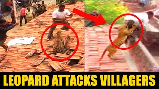 Raw video: Leopard attacking villagers in India in Maharashtra