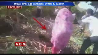 Python Hulchul in Chittoor District..