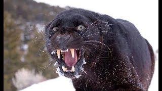 5 Amazing Animal Fights Caught On Camera! Animals attack