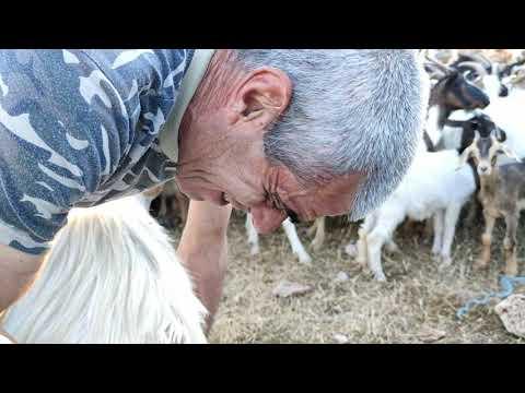 Il pastore e la transumanza