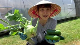 Thu Hoạch Su Hào, Măng Tây và Dưa Leo 🇨🇦315》 Harvesting Kohlrabi, Asparagus and Cucumbers