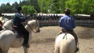 Reportage chevaux camarguais