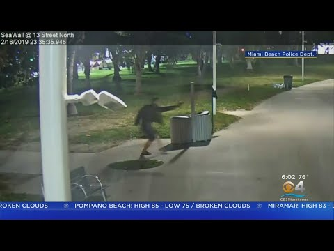 Miami Beach Need Help Finding Gunman In Weekend Murder