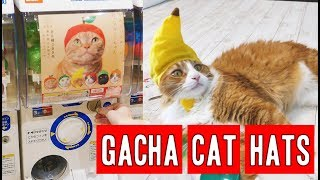 The Japanese way to annoy cats | CAT GACHAPON