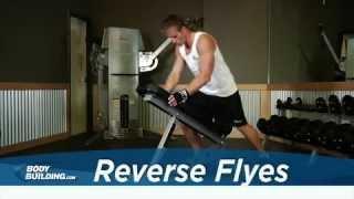 Reverse Flyes - Shoulder Exercise - Bodybuilding.com