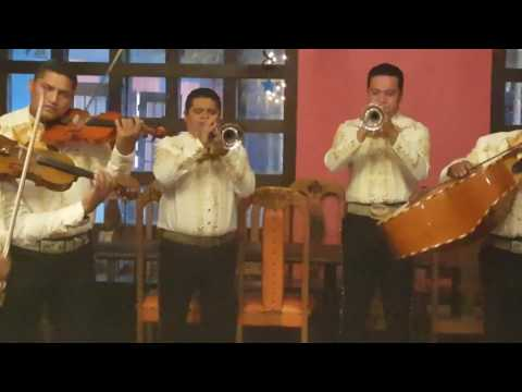 Árboles de la barranca - Mi Serenata - McAllen Texas
