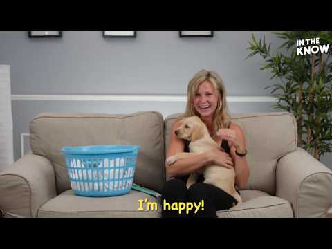 This surprise puppy will have you in tears